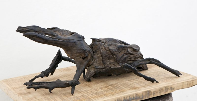Wood Sculpture│Rhino Beetle 6