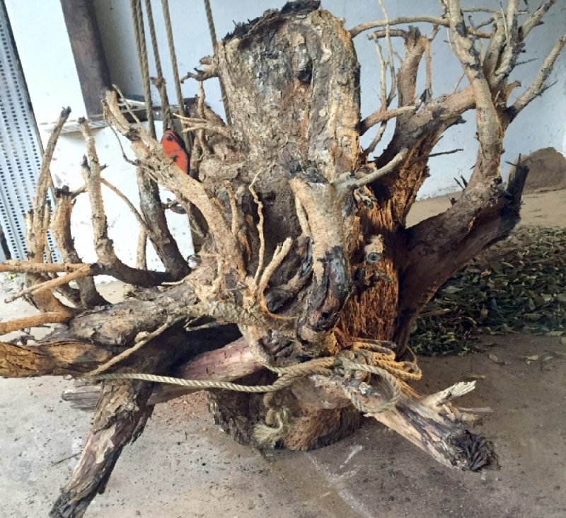 African Furntiure │Tree Root Table Bases